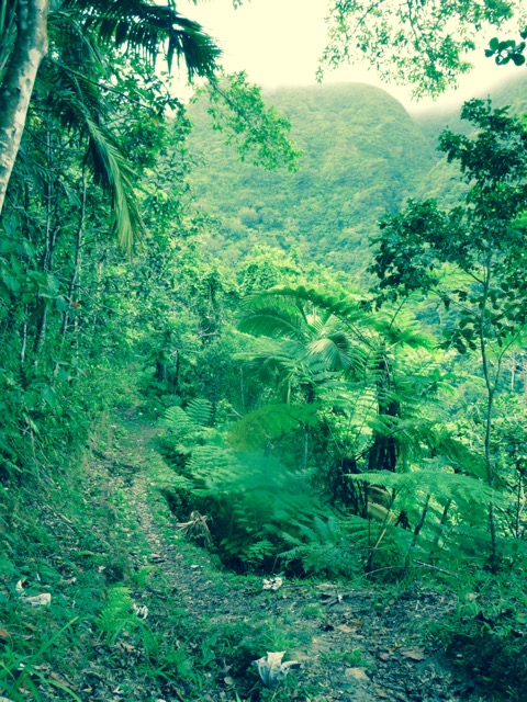 The lush rainforest in unspoiled Nevis